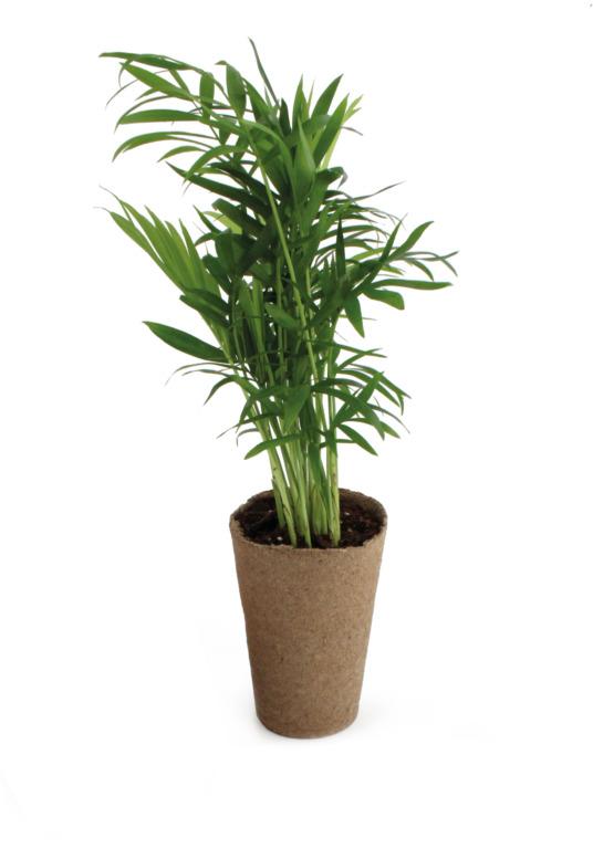 Plante dépolluante, zéro déchet !